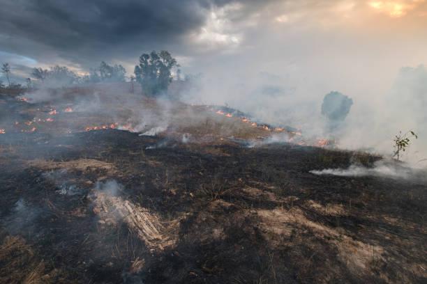 Bushfire, Burned black land on hill in Australia stock photo