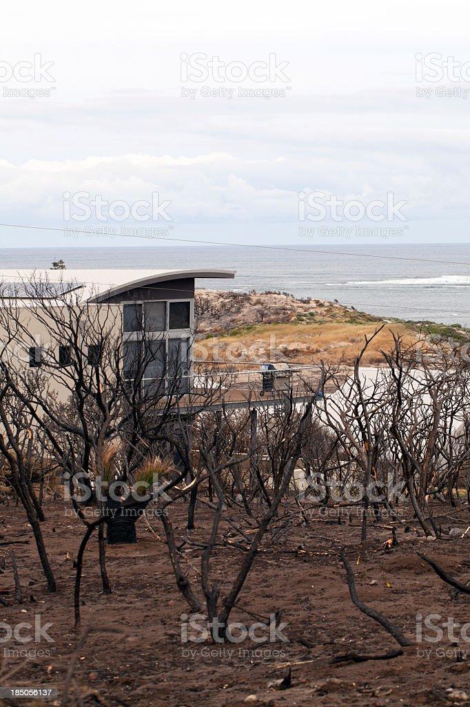 Bushfire damage in Australia stock photo