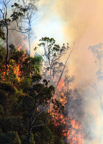 Bushfire in Australian bush stock photo