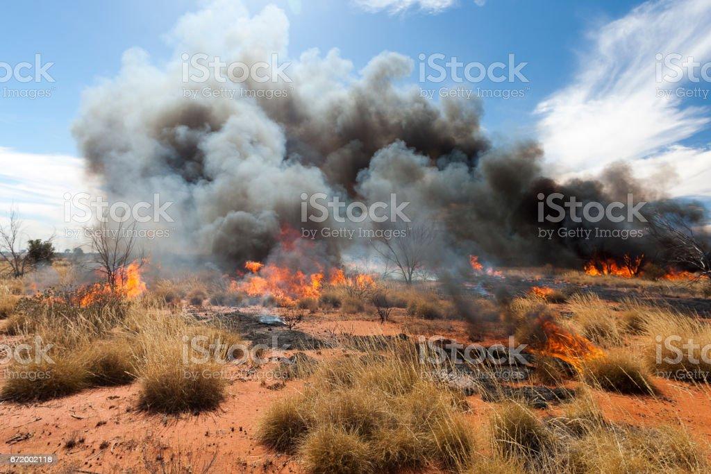 Bushfire in outback Australia - Foto stock royalty-free di Albero