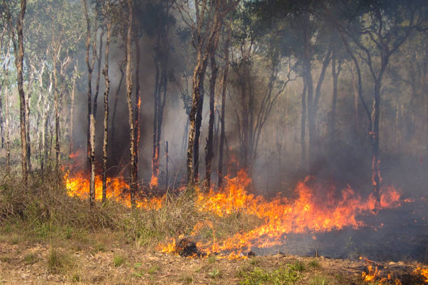 bushfire in the outback Bushfire in the outback, Northern Territory,Australia fire natural phenomenon stock pictures, royalty-free photos & images