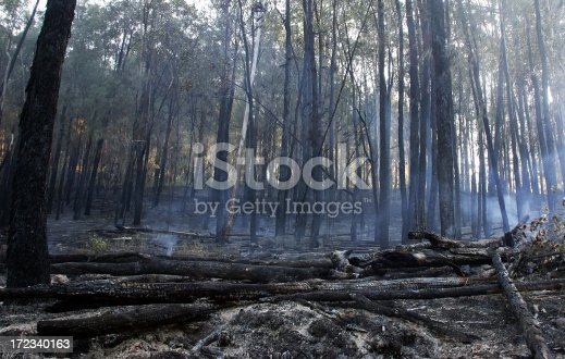 An area of burnt out forrest smoulders after a bushfire