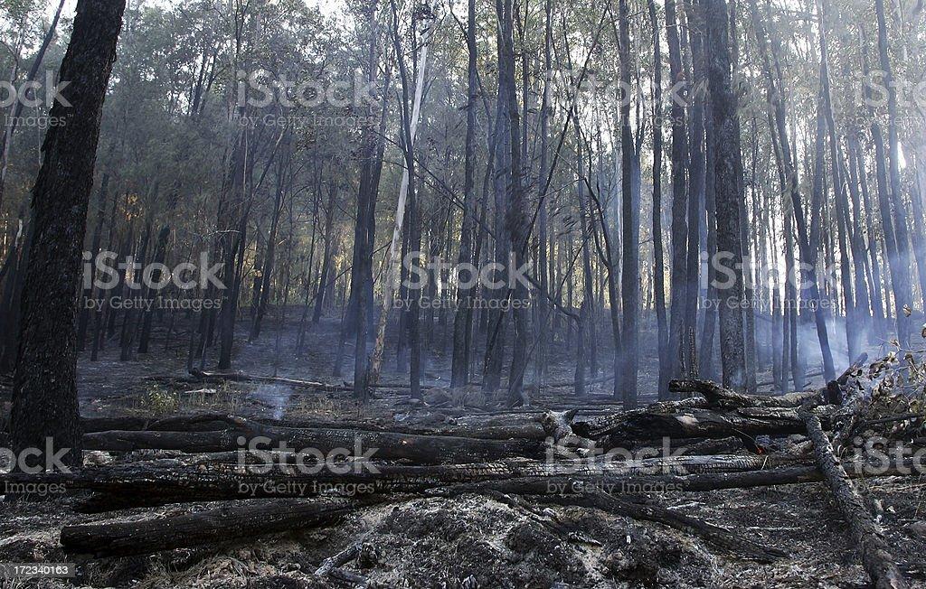 Bushfire – Foto