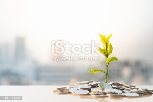 Plant on pile coins with city background