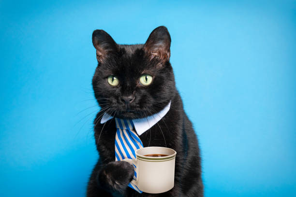 Business Cat Holding Cup of Coffee stock photo