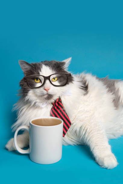Business Cat mit Kaffee – Foto