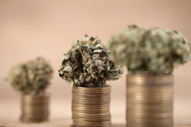Business concept medical cannabis . marijuana stack of coins rising stock photo