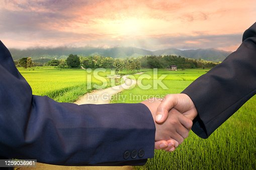 istock Business concept.Business handshake land purchase. Beautiful green young rice field, local soil road, morning golden sun light. 1259036961