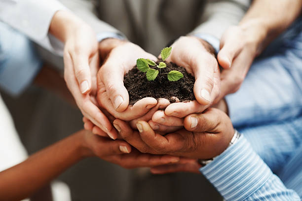 Business development - Hands holding seedling in a group stock photo