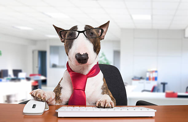 business dog at work - information equipment stock photos and pictures
