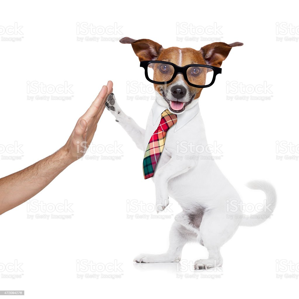 business dog high five stock photo