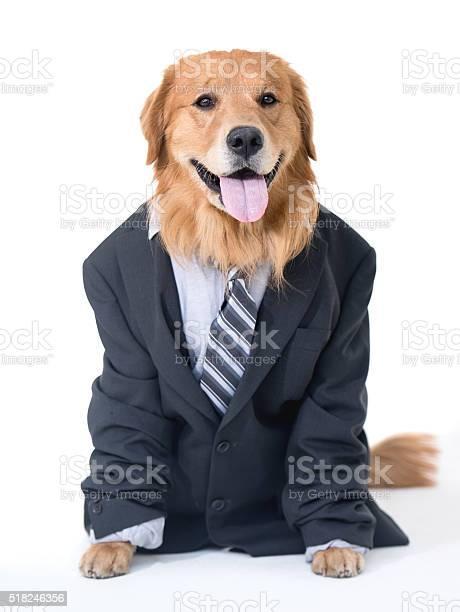 Business dog picture id518246356?b=1&k=6&m=518246356&s=612x612&h=yhxfyuxnv6km6xqd pk3y53n8i0wj6valtpotm11k m=