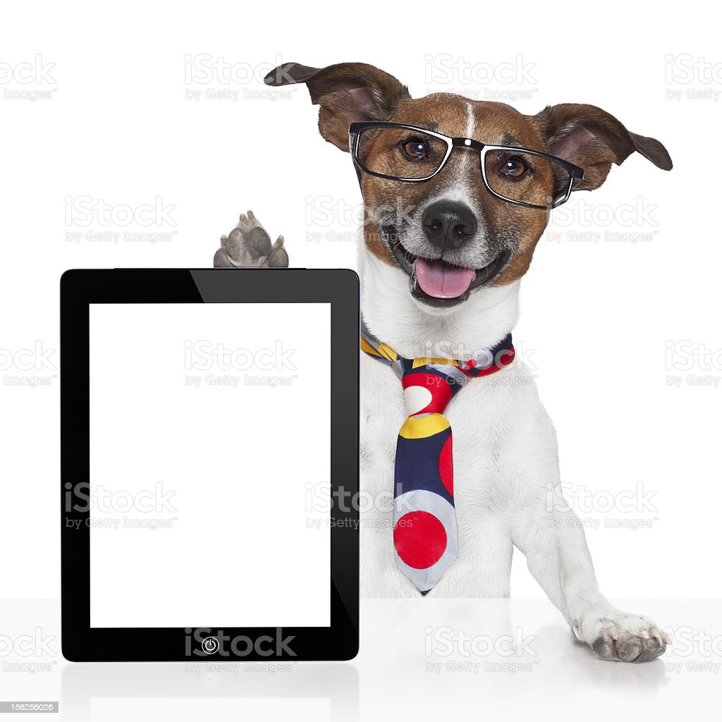 business dog tablet pc ebook touch pad royalty-free stock photo