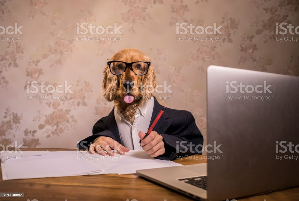 The dog in the suit is working on a computer