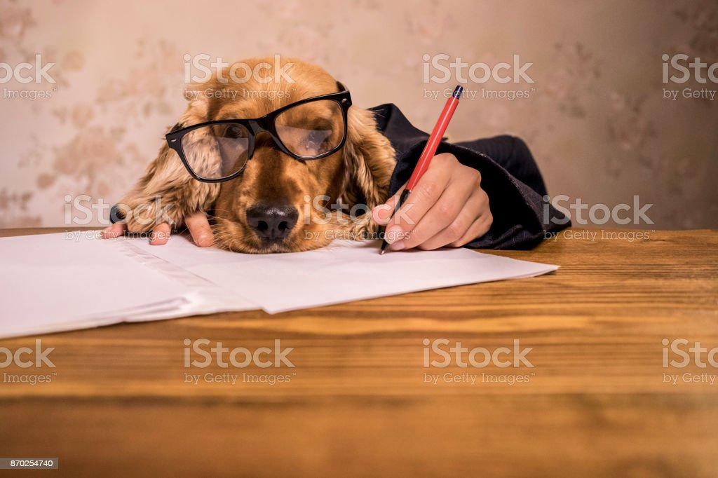Business dog is thinking about new business ideas.