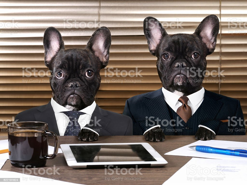Business dogs in suits at work behind the office table стоковое фото