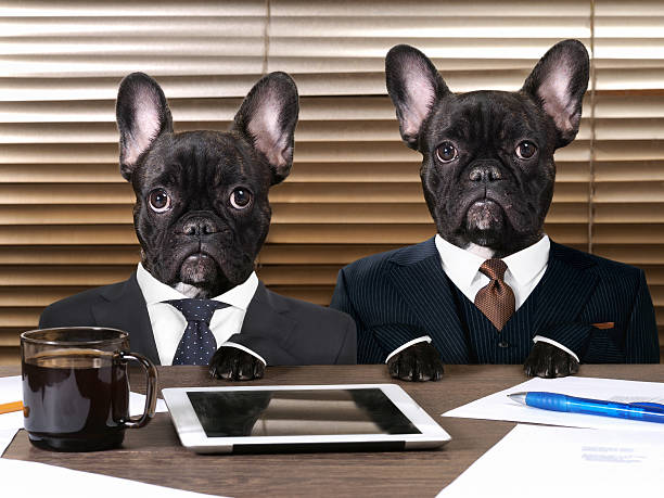 Business dogs in suits at work behind the office table stock photo