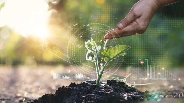 Business growth concept, Man watering young sprout with hand and  graph growth of business, Stock profits and investments, Strategy and planning of successful. stock photo