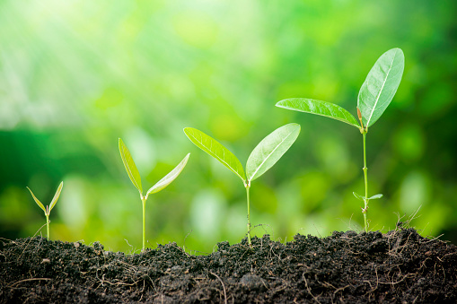 1094263056 istock photo Business growth concept. 1188845264