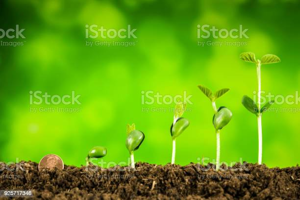 Business investmentplant growing on green background picture id925717346?b=1&k=6&m=925717346&s=612x612&h=b7qww0j6b4enkl9rezmfh d86j7qi2zksr83xmwax2q=