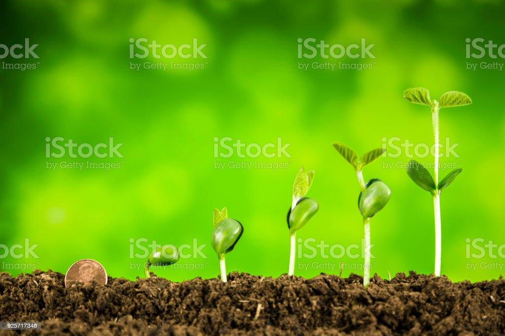 negocios inversión: planta que crece en fondo verde - foto de stock