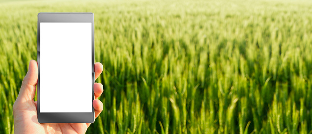 istock Business man using digital tablet in the field 944364702