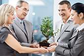 Group of happy business people holding a Bonsai tree.