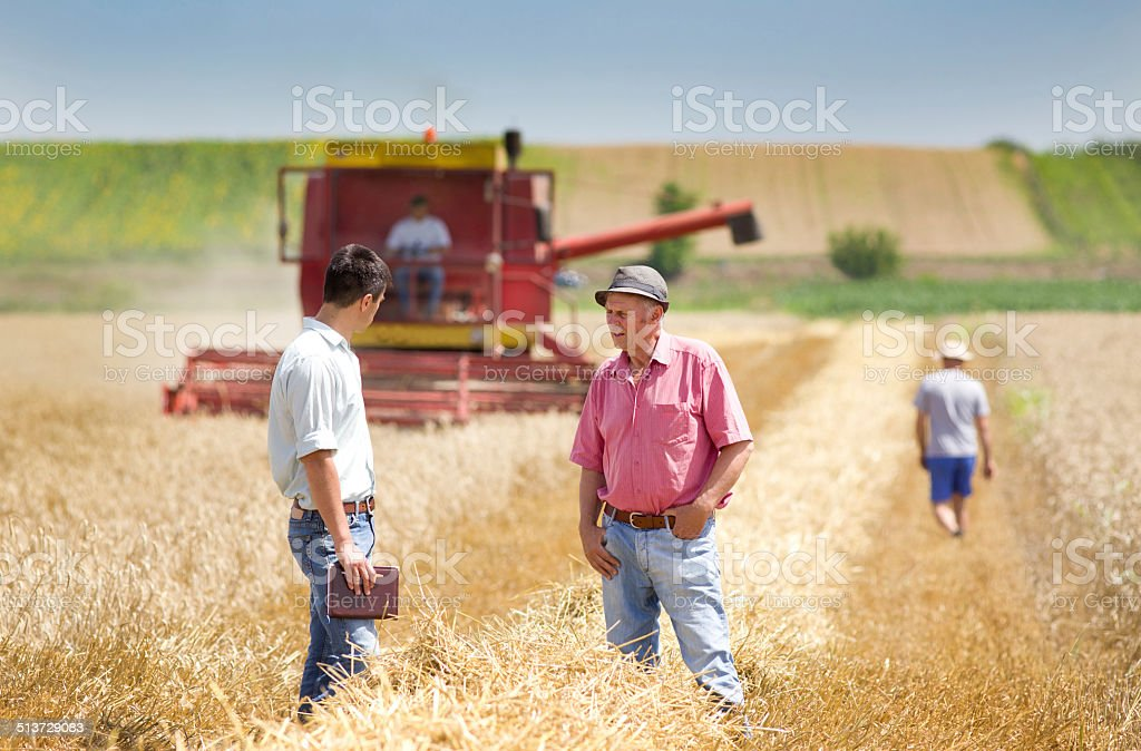 Business people on wheat field stock photo