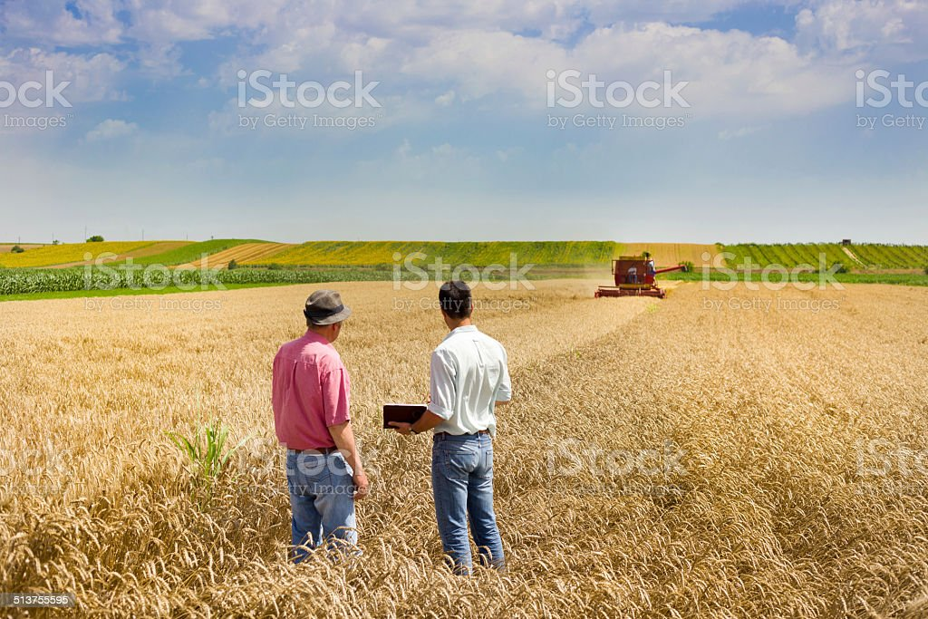 Business people on wheat field Peasant and business man talking on wheat field during harvesting Adult Stock Photo