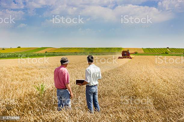 Business People On Wheat Field Stock Photo - Download Image Now