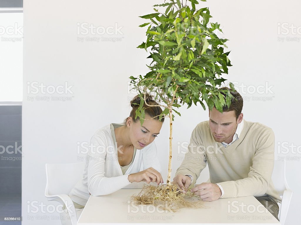 Business people tending roots of small tree royalty-free stock photo