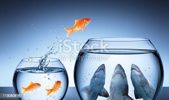 Business Risk Concept - Goldfish Jumping In Shark Tank