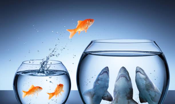 商業風險概念-金魚在鯊魚罐中跳躍 - 逆境 個照片及圖片檔