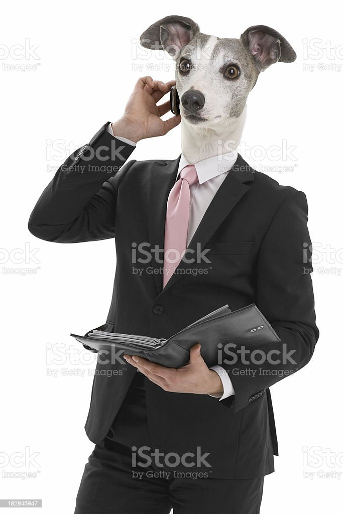 Business Whippet stock photo