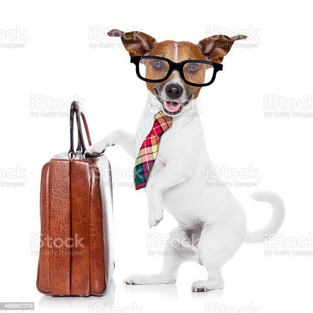 Businessman boss dog picture id469962016?b=1&k=6&m=469962016&s=612x612&h= flsh9y7eq4wmgvjumofungbogstqiz9szrniz8io28=