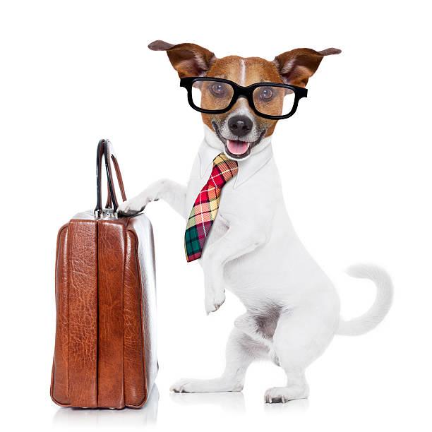 Businessman boss dog picture id469962016?b=1&k=6&m=469962016&s=612x612&w=0&h=n1z0x0qtwahwjtlel2bfotrjvt6msmnn44pbawftvua=