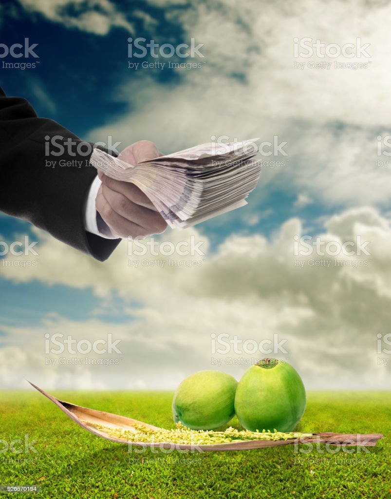 Businessman buy coconut and spadix flower of coconut with green field background stock photo