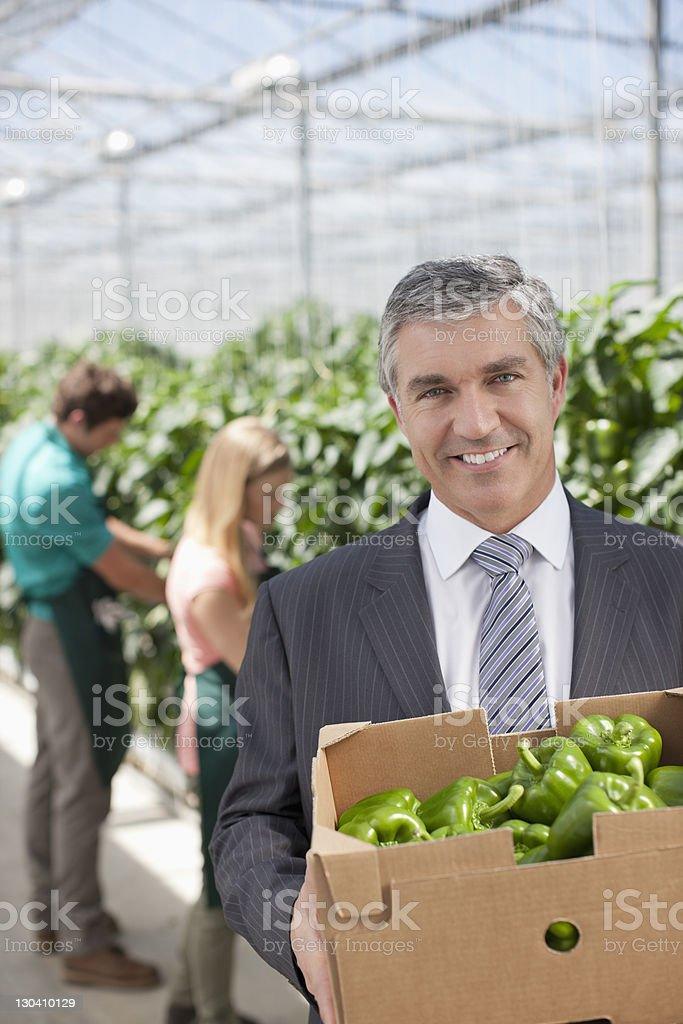 Businessman carrying box of produce in greenhouse royalty-free stock photo