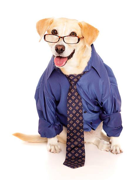 Businessman dog picture id155099245?b=1&k=6&m=155099245&s=612x612&w=0&h=uz3xx xipqkwrgqn1s5ytzmxba0rf far4umfokj vm=
