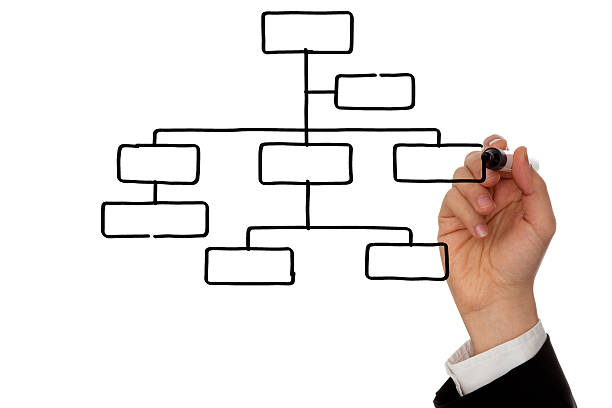 businessman hand drawing organizational chart with marker - organizational chart stock photos and pictures