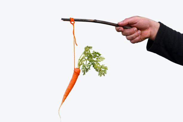 businessman hand holding carrot on a stick isolated on white background - agitare una carota davanti a qualcuno foto e immagini stock