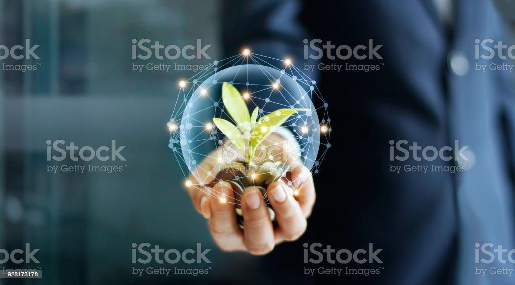 동전 및 네트워크 연결에 새싹 사업가 손. 공장 동전 돈을 더미에 성장입니다. 돈 성장 개념입니다. - 로열티 프리 개념 스톡 사진