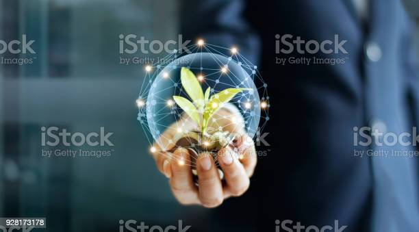 Photo of Businessman hand with coins and sprout in network connection. Plant growing on pile of coins money. Money growth concept.