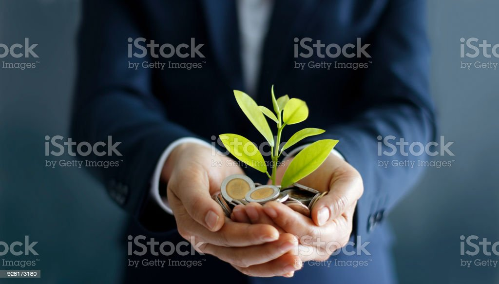 Businessman hands with coins and sprout in palm. Plant growing on pile of coins money. Money growth concept. stock photo