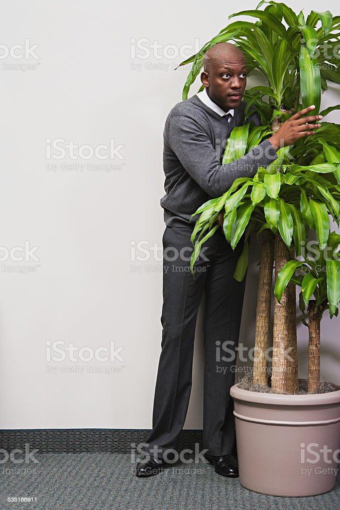 Businessman hiding behind office plant stock photo