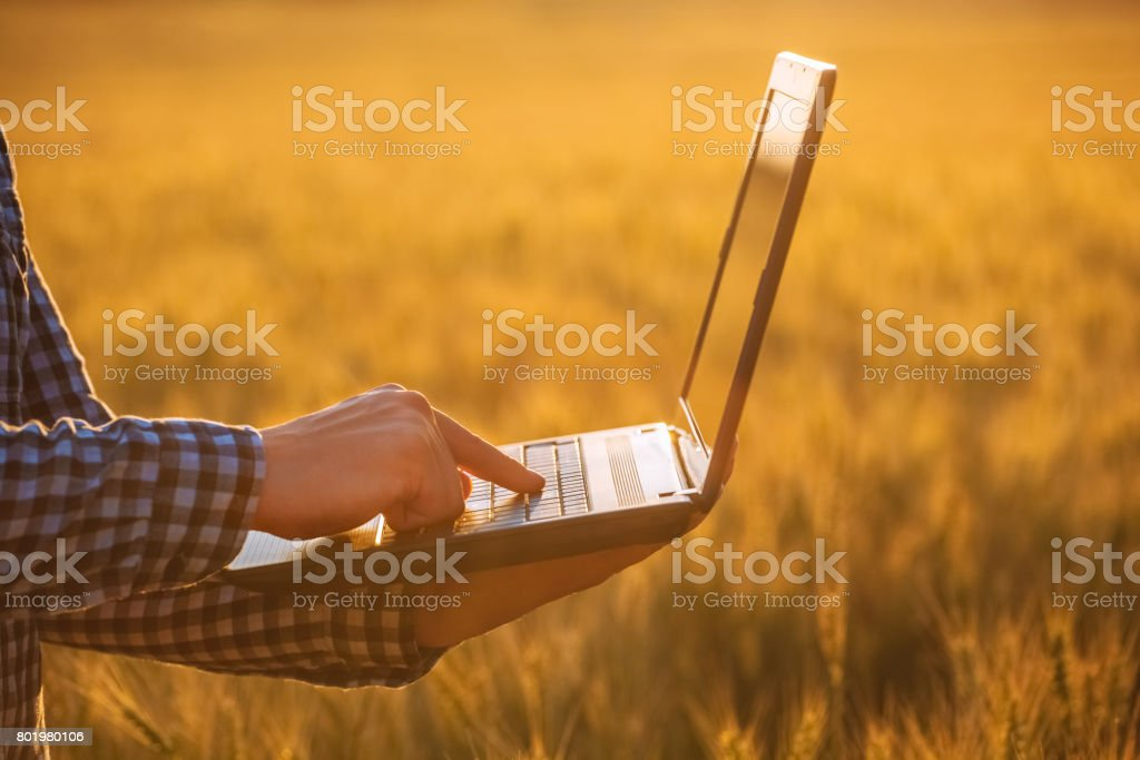 Businessman is on a field of ripe wheat and holds a laptop in his hands. stock photo
