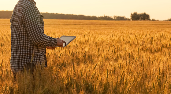 Businessman is on a field of ripe wheat and is holding a Tablet computer.