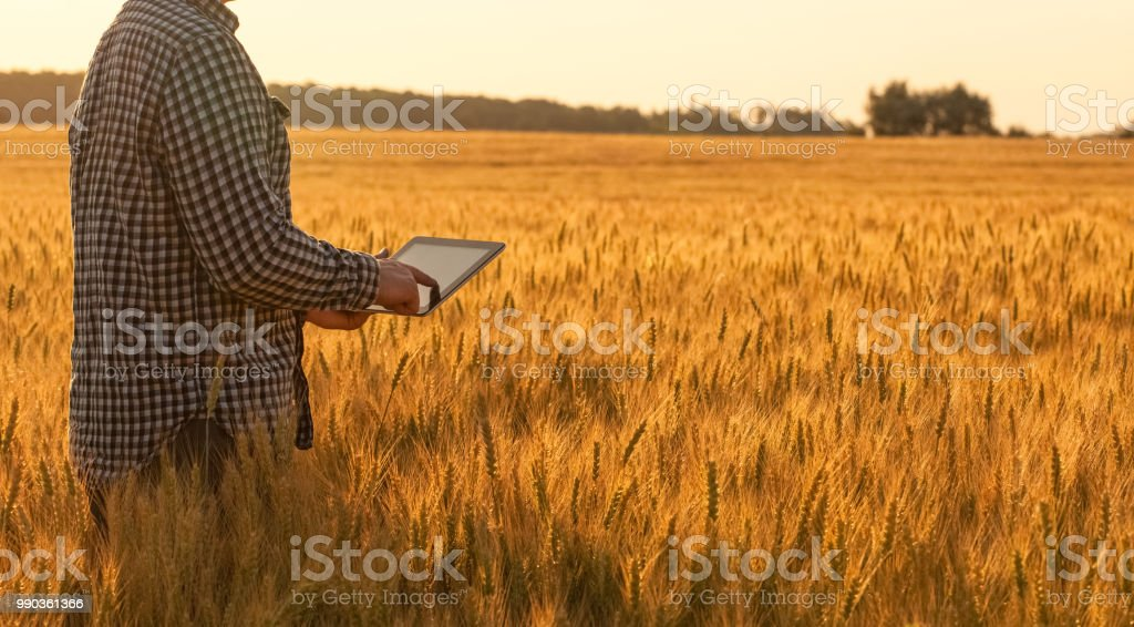 Businessman is on a field of ripe wheat and is holding a Tablet computer. stock photo