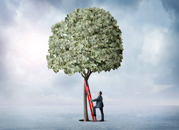 Businessman Leans A Ladder Against A Money Tree A businessman leans his red ladder against a money tree as looks up in preparation to climb into the tree. money tree stock pictures, royalty-free photos & images