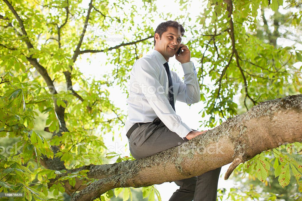 Businessman sitting in tree talking on cell phone royalty-free stock photo